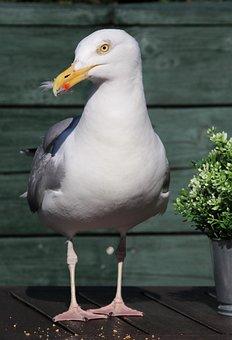 Bird, Nature, Animal, Animal World, Feather, Seagull