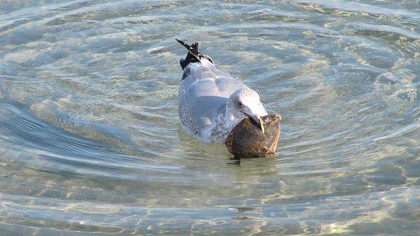 Waters, Nature, Bird, Animal World, Animal, Seagull
