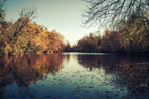 Tree, Nature, Autumn, Reflection, Lake, Waters