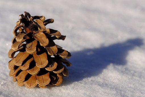 Winter, Snow, Pine Cones, Larch Cones, Cold, Background