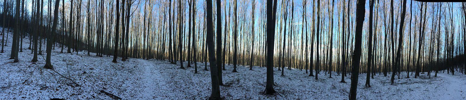 Panorama-like, Nature, Landscape, Forest, Beech