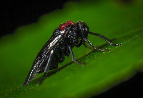 Insect, Nature, Bespozvonochnoe, Wing, Macro