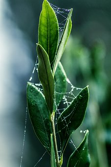 Leaf, Plant, Nature, Dew, Pearl, Growth, Close, Garden