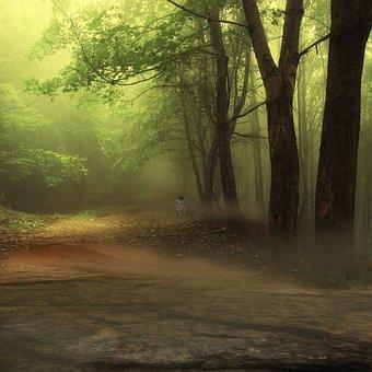 Forest, Wolf, Composing, Digital Art, Nature