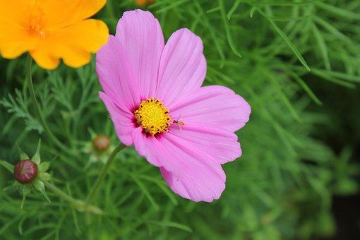 Nature, Summer, Flora, Garden, Flower