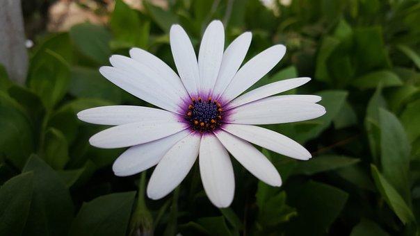 Flower, Plant, Nature, Summer, Leaf, Nice, Petal