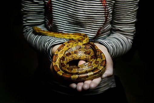 Snake, Girl, Holding, Person, Young, Animal, Skin