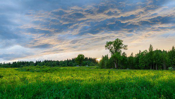 Panoramic, Nature, Landscape, Field, Grass, Tree