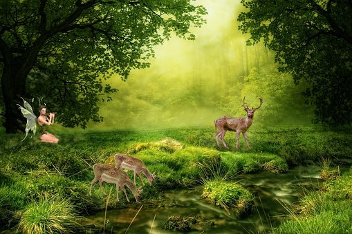 Nature, Grass, Tree, Wood, Summer, Idyllic, Idyll