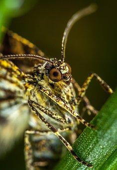 Insect, Nature, Living Nature, Animals, Bespozvonochnoe