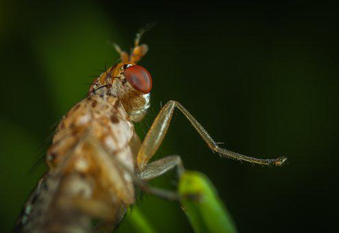 Insect, Animals, Nature, Living Nature, Macro, Eyes