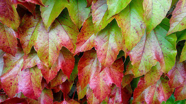Leaf, Autumn, Nature, Plant, Season, Garden, Park