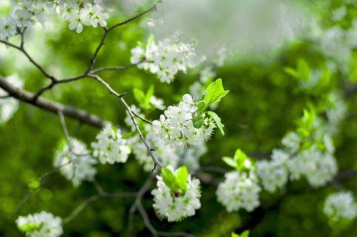 Nature, Tree, Season, Plant, Flower, Freshness, Summer