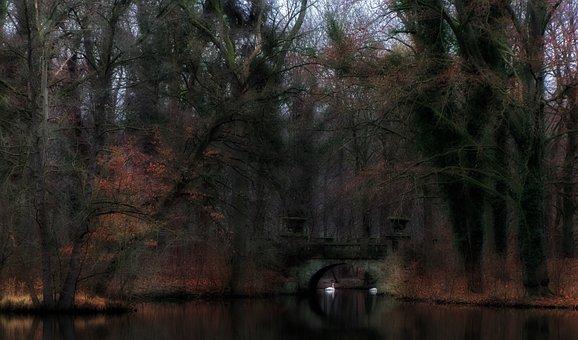 Pond, Swan, Lake, January, Slurry, Dark, Mood, Trees