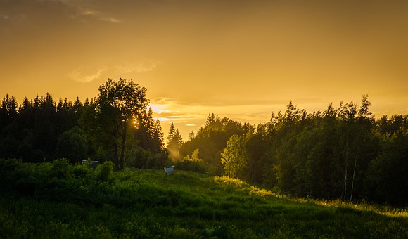 Tree, Landscape, Sunset, Nature, Russia, Forest, Sun