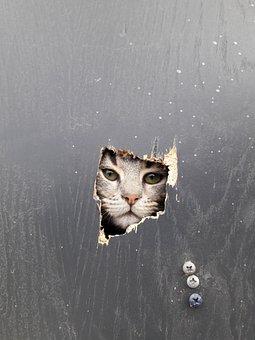 Portrait, Single, No One, Cat, Wallpaper, Outdoor, Wall