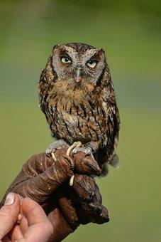 Nature, Raptor, Owl, Bird, Bird Of Prey, Animals