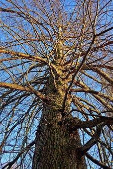 Tree, Trunk, Bark, Branch, Rising Up, Upward View