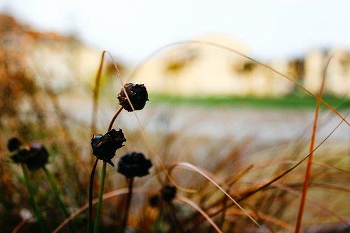 Nature, Outdoors, Flora, Grass, Field, Fall, Autumn