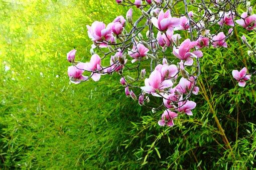Nature, Flower, Flora, Garden, Leaf, Blossom, Outdoors