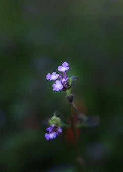Flower, Nature, Outdoors, Leaf, Flora, Garden, Blur