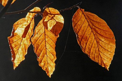 Leaf, Autumn, Plant, Nature, Forest, Fall Foliage