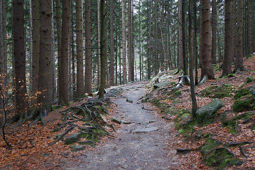 Forest Path, Giant Mountains, National Park, Gorgeous