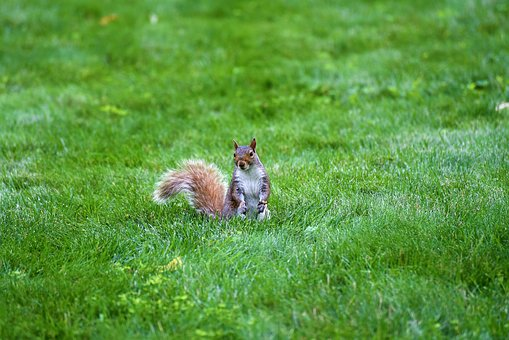 Grass, Nature, Hayfield, Animal, Little, Cute, Outdoors