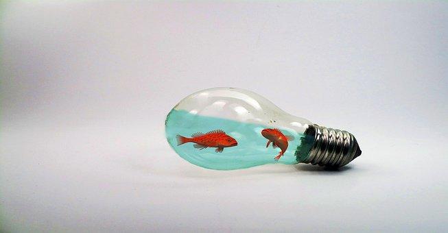 Fish, Water, Lamp