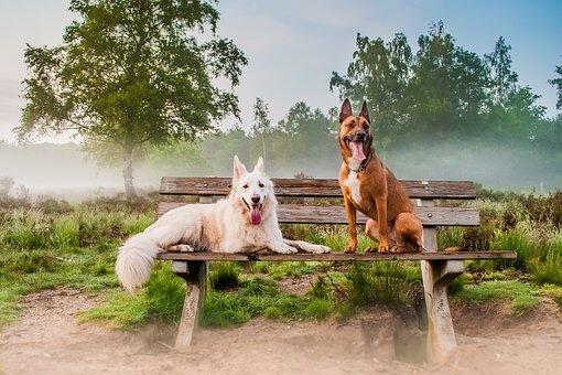 Nature, Outdoor, Mammals, Nice, Rural Area, Landscape