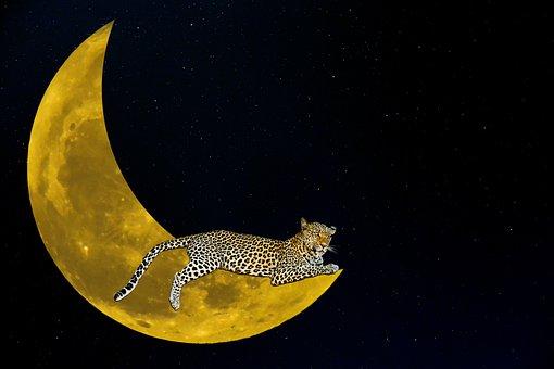 Fantasy, Moon, Leopard, Night, Star, Crescent, Mystical
