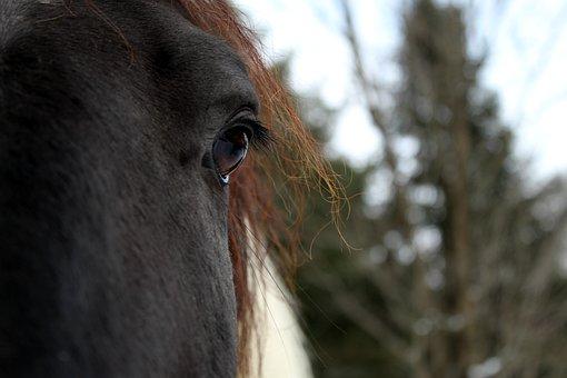 Nature, Mammal, Portrait, Animal, Outdoors, Horse