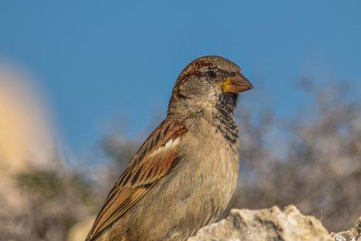 Sparrow, Nature, Wildlife, Animal, Outdoors, Bird, Rock