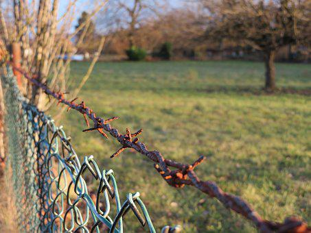 Tree, Nature, Season, Landscape, Fence