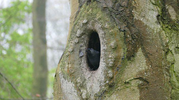 Bird, Tree, Nature, Wood, Nest, Cave