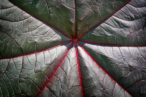 Leaf, Plant, Background, Nature, Close, Texture