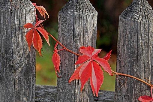 Wood, Nature, Leaf, Autumn, Tree, Plant, Color, Garden