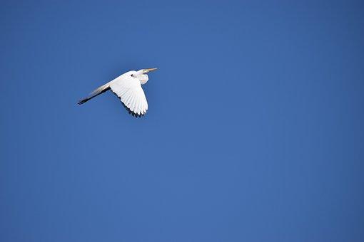 Nature, Sky, Bird, Animal World, Flight, Freedom