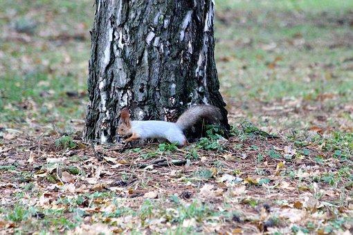 Squirrel, Runs, Nature, Tree, Park, Outdoors, Autumn