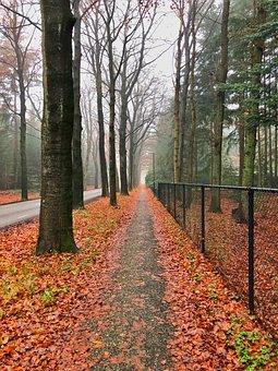 Fall, Leaf, Tree, Season, Wood, Nature, Landscape