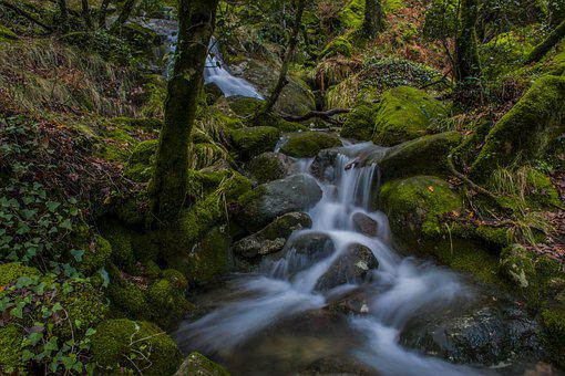 Waterfall, Rio, Nature, Cascade, Herb, Forest, Water