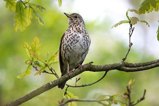 Nature, Birds, Wildlife, Outdoor, Animal Kingdom