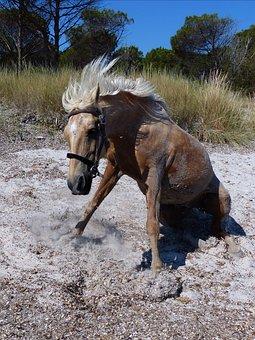 Horse, Sitting, Beach, Momentum, Rises, Mane, Animal