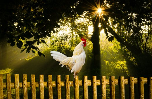 Morning, Sun Rise, Nature, Bird, Outdoors, Wood, Summer