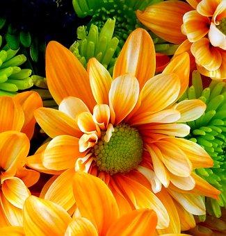 Flower, Nature, Garden, Flora, Summer, Bouquet, Petal