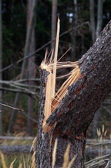 Broken Tree, Chips, Trunk, Forest, Destroy, Storm