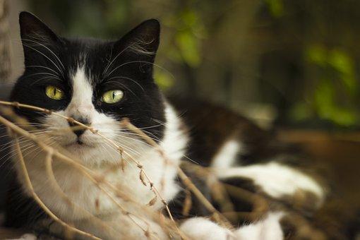 Animalia, Nice, Nature, Portrait, Cat, Kitten, Look