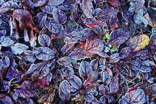 Leaf, Plant, Hoar, Hoarfrost, Frozen, Ice, Crystal