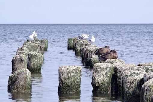 Breakwater, The Seagulls, Ducks, Birds, Sea, Wild Birds