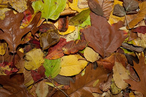 Leaf, Fall, Season, Flora, Natural, Plant, Botany